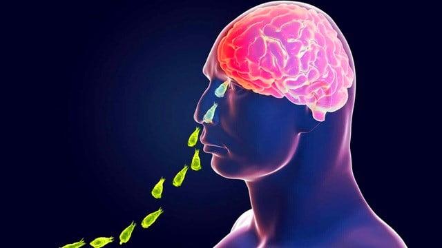 Amip ăn não lan từ Nam lên Bắc nước Mỹ.